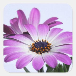 Pink daisies - Sticker