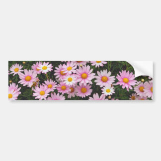 Pink Daisies with Yellow Centers Bumper Stickers