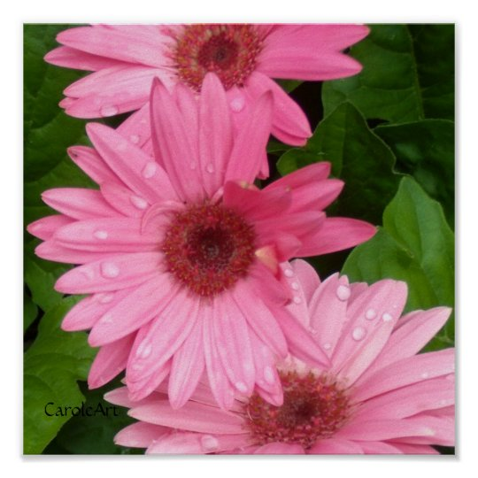 Pink Daisy Chain Poster
