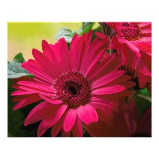 Pink Daisy Details Photograph