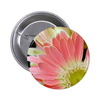 Pink daisy flower blossoms 2 inch round button