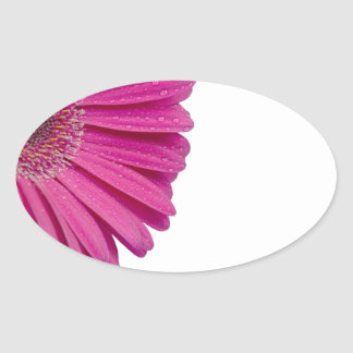 Pink daisy flower with water droplets beautiful oval sticker