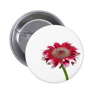 pink daisy pinback buttons
