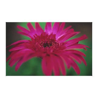 Pink Daisy Print on Canvas Canvas Prints