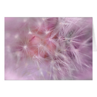 Pink Dandelion Blank Greeting Card