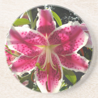 Pink Day Lily Drink Coaster