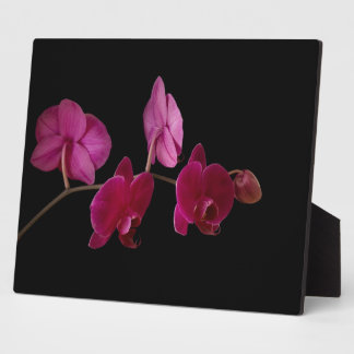 Pink Dendrobium Orchid - Customized Flowers Display Plaque