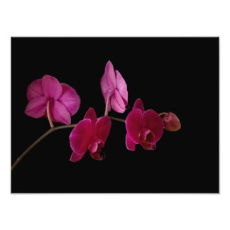 Pink Dendrobium Orchid - Customized Flowers Photo