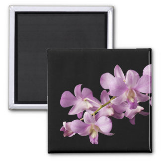 Pink Dendrobium Orchid Flower on Black - Orchids Square Magnet
