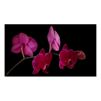 Pink Dendrobium Orchid on Black - Customized Pack Of Standard Business Cards