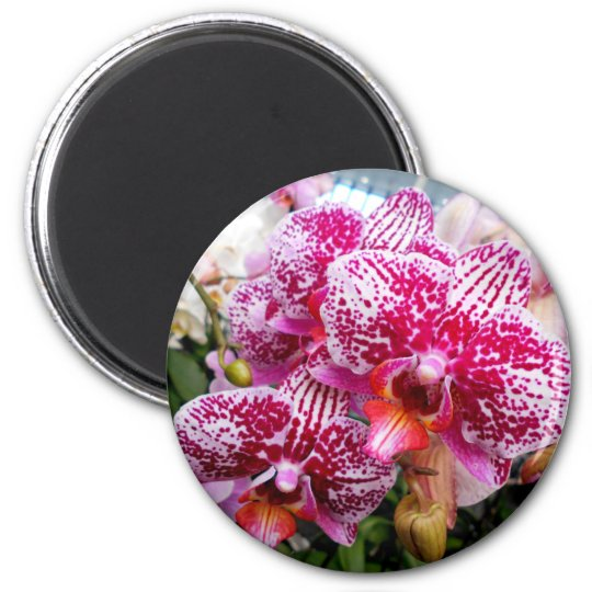 Pink Dendrobium Orchids 6 Cm Round Magnet