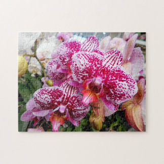 Pink Dendrobium Orchids Jigsaw Puzzle