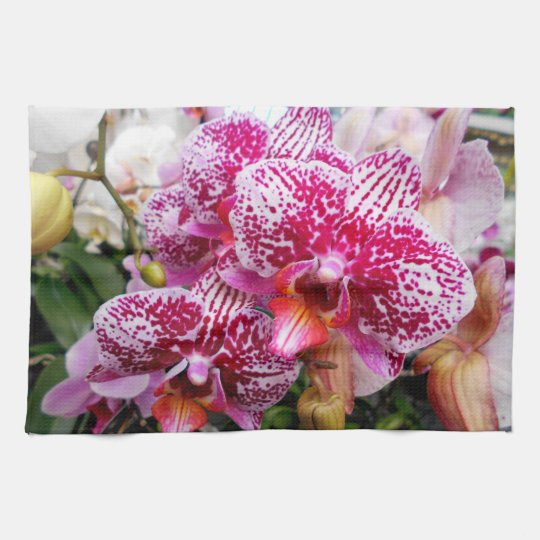 Pink Dendrobium Orchids Kitchen Towels
