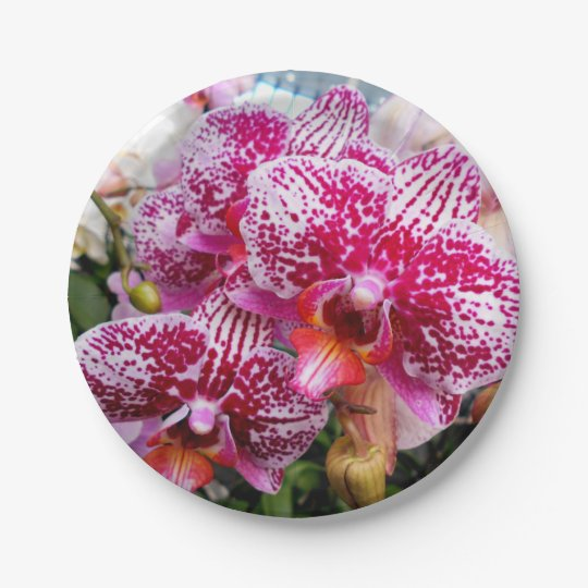 Pink Dendrobium Orchids Paper Plate