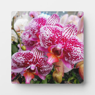 Pink Dendrobium Orchids Plaque