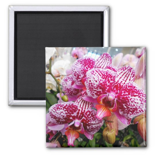 Pink Dendrobium Orchids Square Magnet