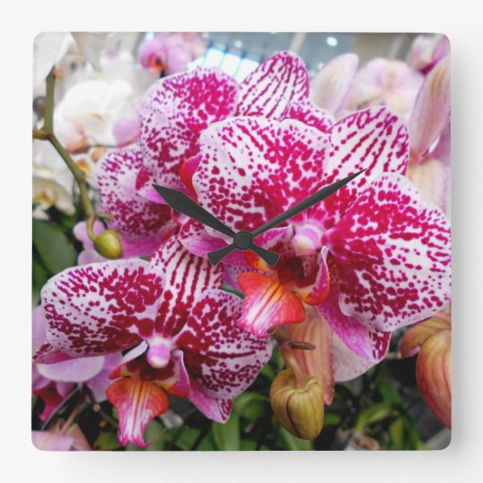 Pink Dendrobium Orchids Square Wall Clock