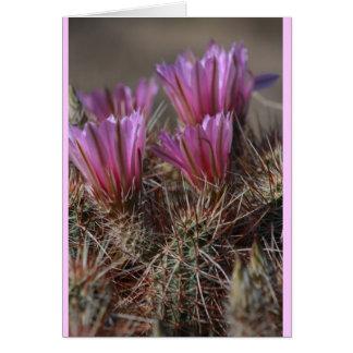 Pink Desert cactus bloom Card