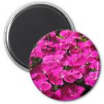 Pink Dianthus Flowers Fridge Magnets