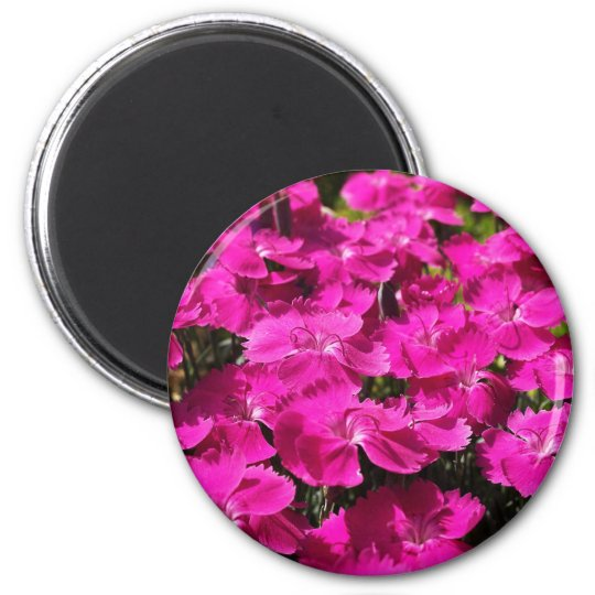 Pink Dianthus Flowers Magnet