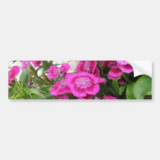 Pink Dianthus/Sweet William Car Bumper Sticker