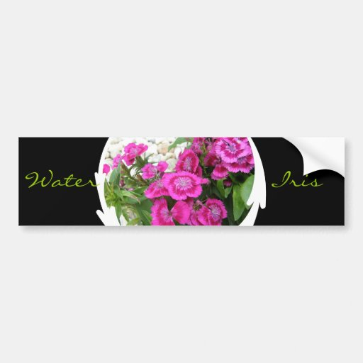 Pink Dianthus/Sweet William Bumper Stickers