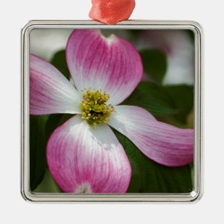 Pink Dogwood Blossoms Macro Christmas Ornaments
