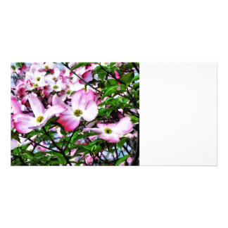 Pink Dogwood Blossoms Photo Card