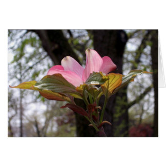 Pink dogwood card