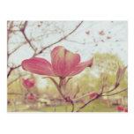 Pink Dogwood Flower Post Cards