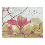 Pink Dogwood Flower Postcard