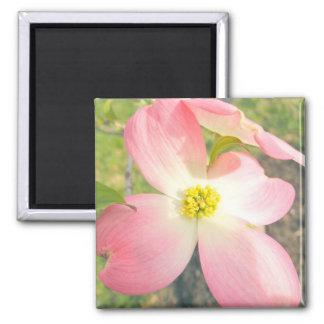 Pink Dogwood Square Magnet