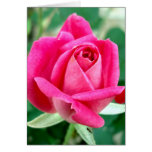 Pink Double Knockout Rose Greeting Card