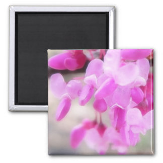 Pink Eastern Redbud Blooms Square Magnet
