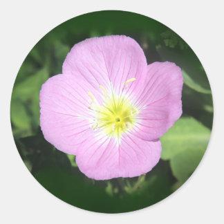 Pink evening primrose flower classic round sticker