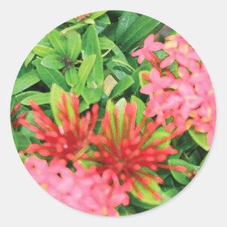 Pink Explosion Sticker