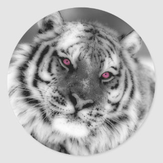 Pink Eyed Tiger Classic Round Sticker