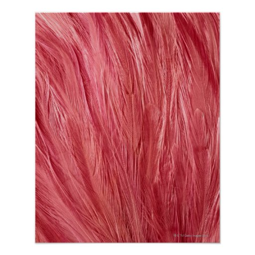 Pink Feathers Posters