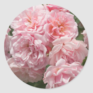 Pink Felicia Roses Sticker