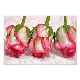 Pink Fizz Print Photographic Print