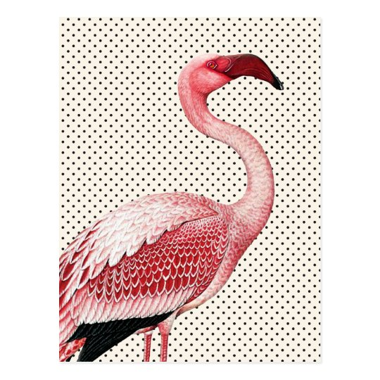 Pink Flamingo and Vintage Polka Dots Postcard