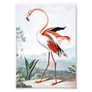 Pink Flamingo Bird Vintage Art Photo