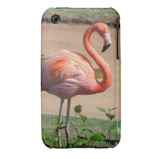 Pink flamingo iPhone 3 Case-Mate cases