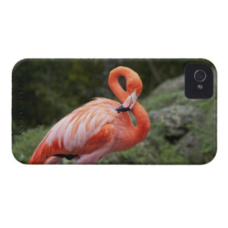 Pink Flamingo iPhone 4 Case-Mate Case