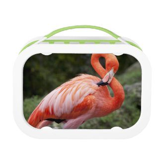 Pink Flamingo Lunchbox