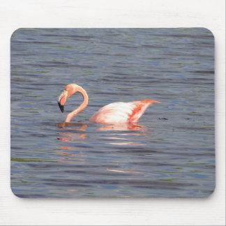 Pink flamingo of the Galapagos Mouse Mat