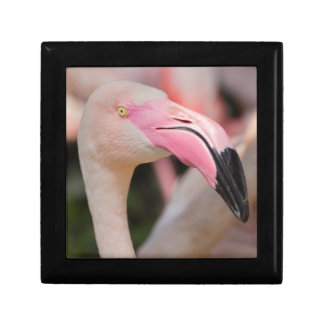 pink flamingo Phoenicopterus ruber roseus Gift Box