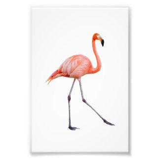 Pink Flamingo Photograph
