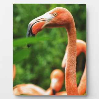 Pink flamingo plaque