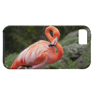 Pink Flamingo Tough iPhone 5 Case